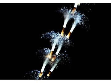Dekorativní LED osvětlení - Světelné větvičky - 120 cm studená bílá